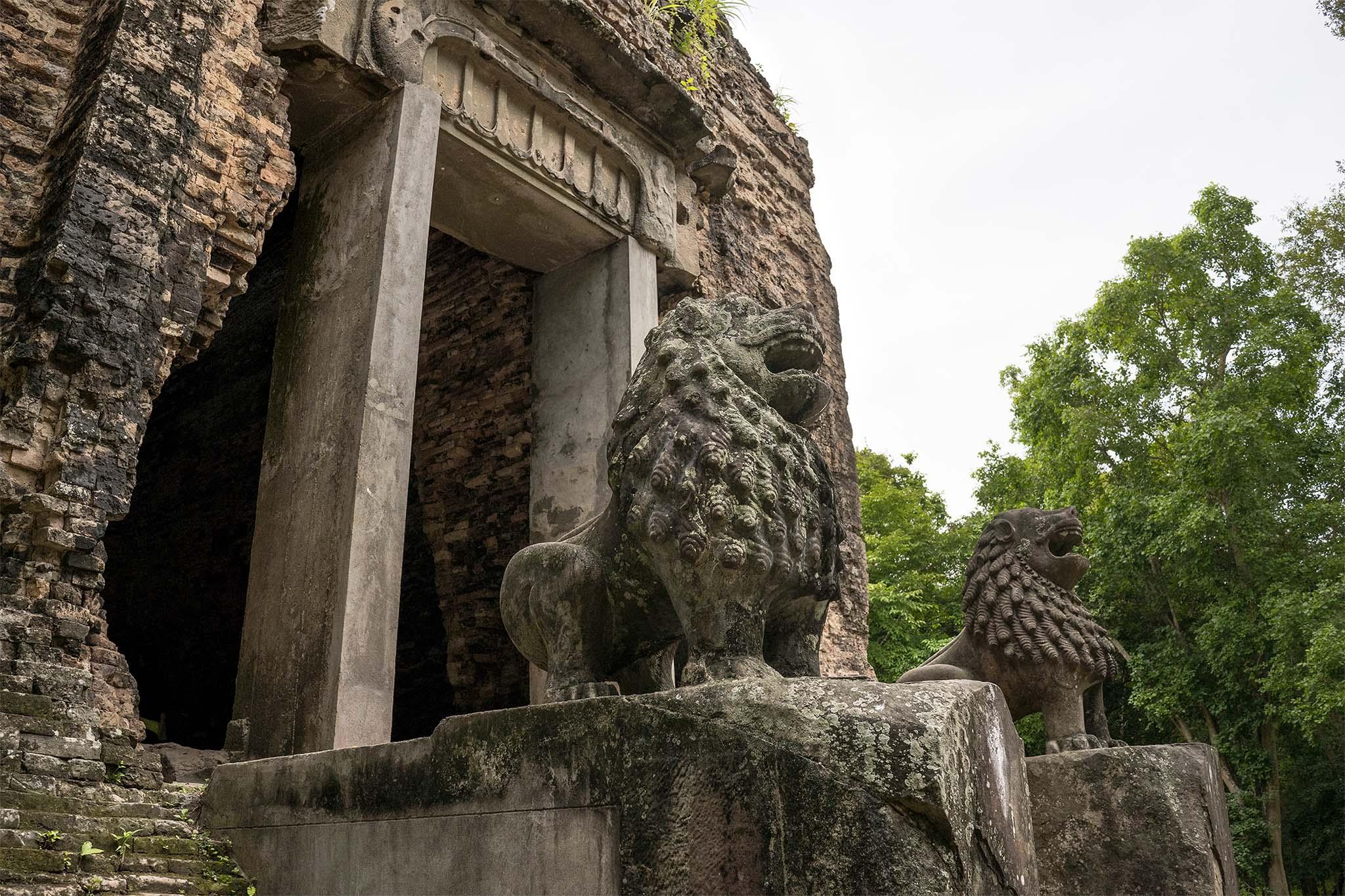 Lazy Owl Image